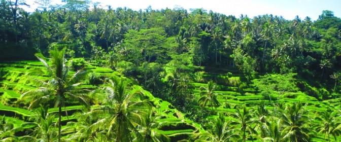 CIRCUIT 2017 SINGAPORE & INDONEZIA: Circuit & sejur in insula Bali de la 1999 euro – oferta expirata
