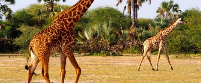 CIRCUIT 2017 KENYA – TANZANIA – ZANZIBAR  de la 770 EURO + 3890 USD – – oferta expirata